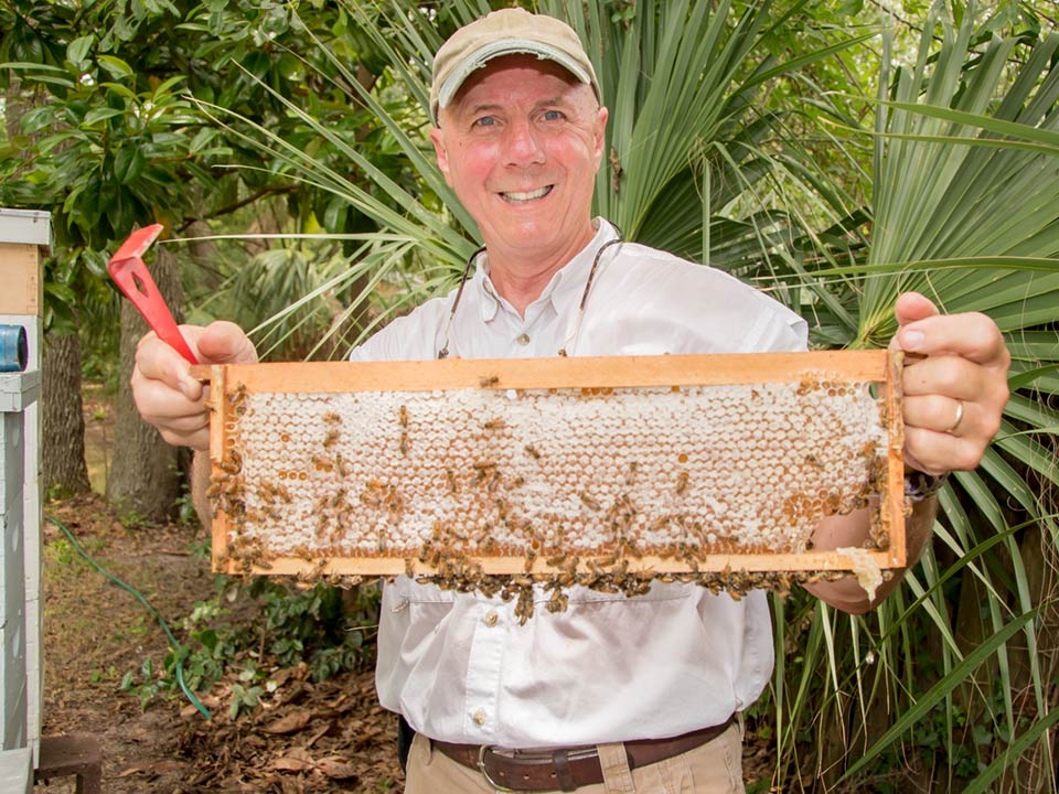 Beekeeper Jim Craig holds a panel of comb in his backyard in Mount Pleasant, SC