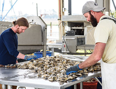 Malcolm Jenkins and Trey McMillan sorting oysters.