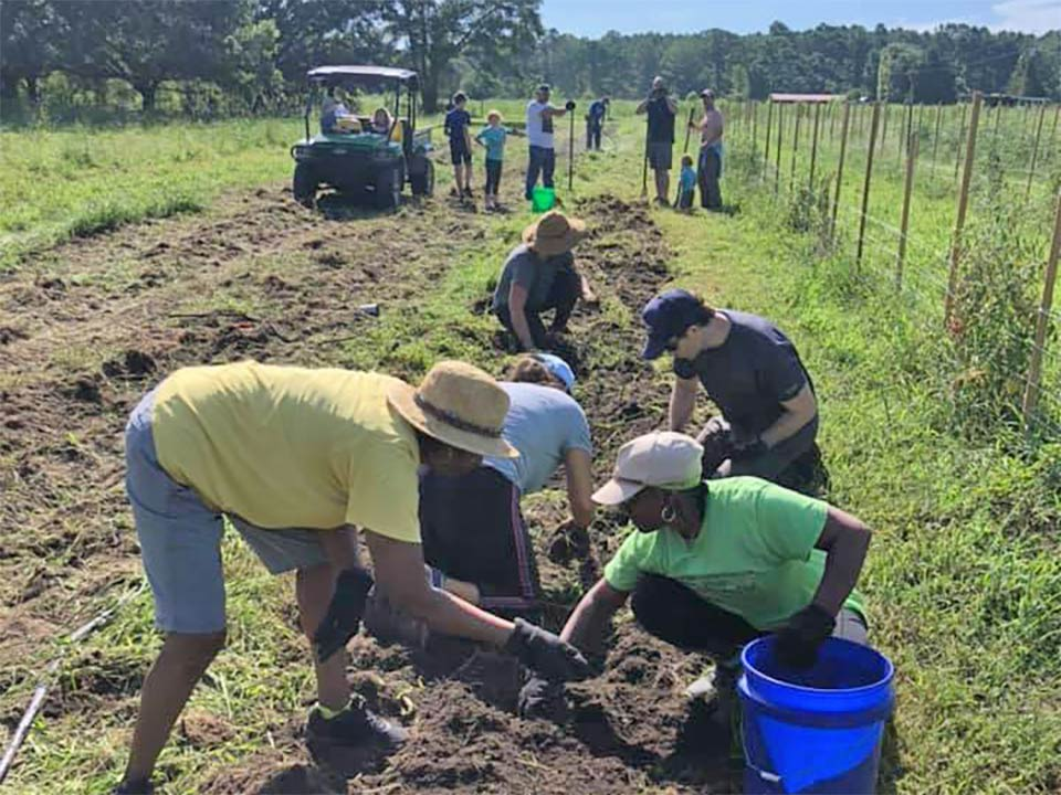 Volunteers helping at Johnson Family Farms