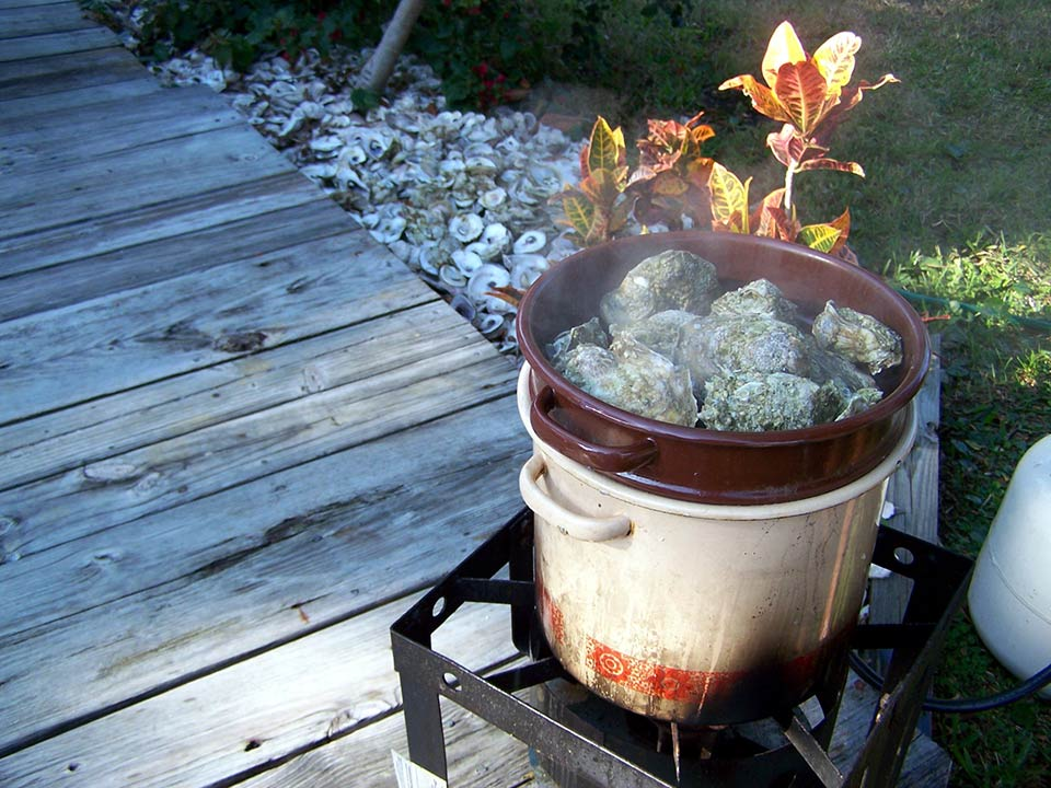 Steaming oysters for an oyster roast